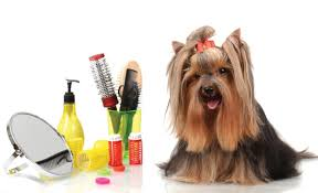 The Art of Dog Grooming | Best Tips and Tricks