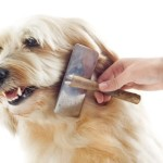Powerful Tips on: How to Sedate a Dog at Home for Grooming