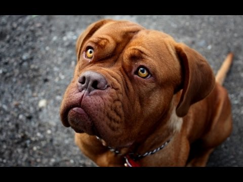 The Most Popular Dog Name In The World