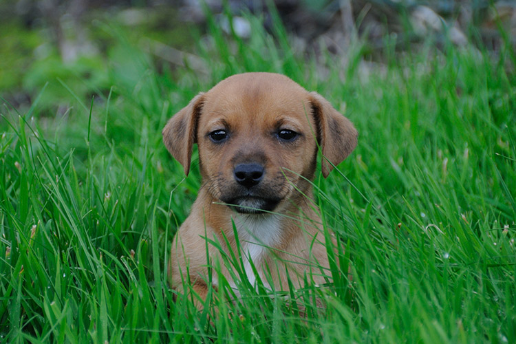 Why-Wont-My-Puppy-Poop-Outside