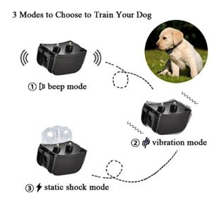 Best shock collars for small dog in 2017 reviews