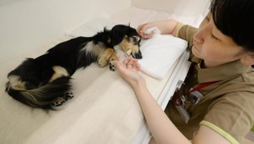 euthanizing the dog to die without