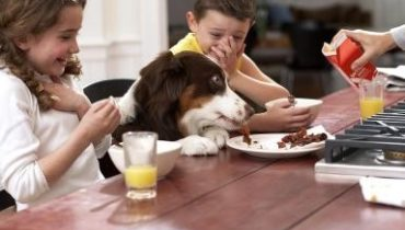 the foods that your dog cannot eat