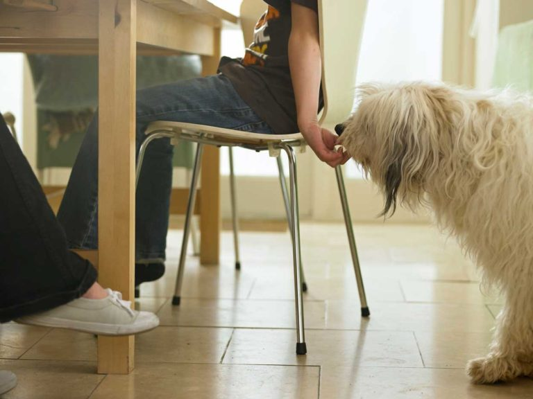 What Happens To A Dog Who Eats Table Scraps?