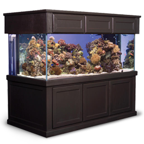 Cheap 55 Gallon Aquarium With Stand Interior D 233 Cor
