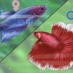 best 5 gallon fish tank :Try Samurai Fighting Fish (betta)