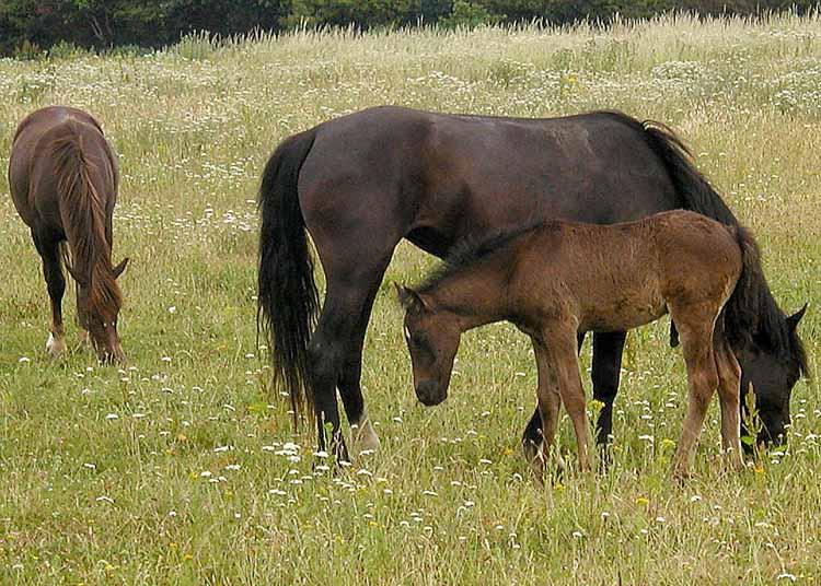 horse london
