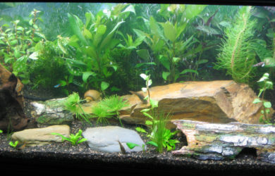 setupTropical Fish Tank