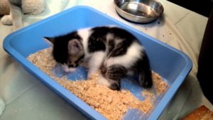 cat-using-litter-box