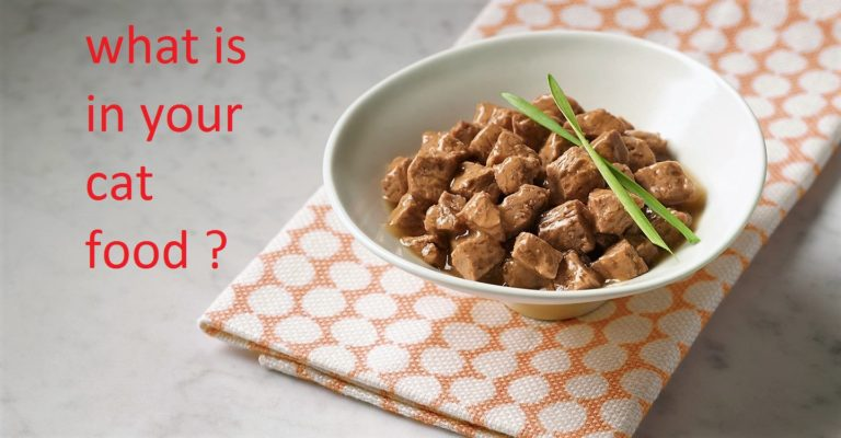 What is in Your Cat's Food?