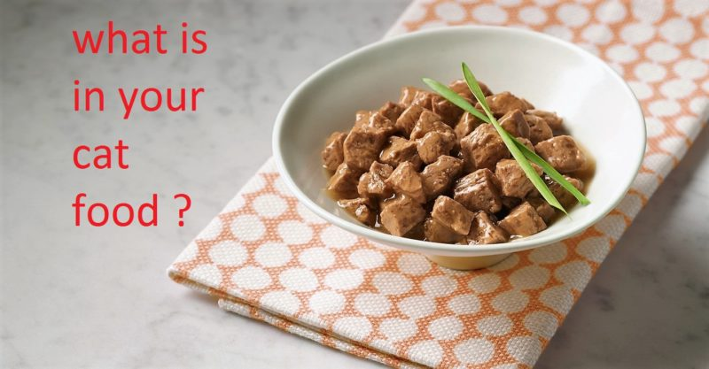 what is in your cat dry food