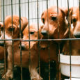 about puppy mills