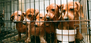 12 Facts About Puppy Mills