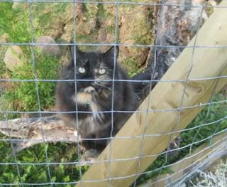 Outdoor Cat Safety: Building a Cat Enclosure