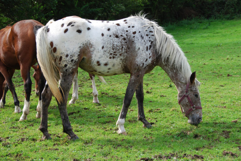 The 9 Unique Horse Breeds