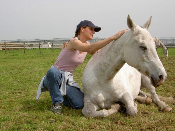 buying-horse