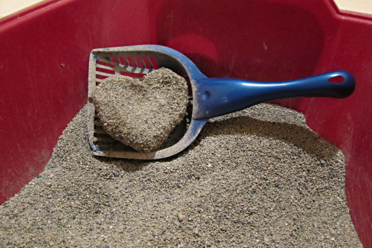 10 Best Dust Free Cat Litter