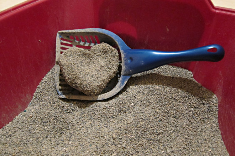 best dust free cat litter box in 2017