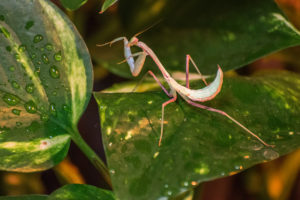 Five of The Coolest and Easiest Exotic Pets for Kids