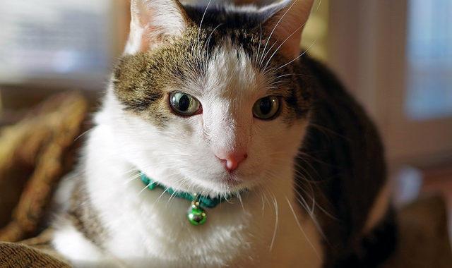 Things you need to know before buying a cat shock collar ?