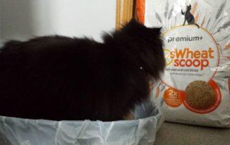 8 best flushable cat litter brands reviews