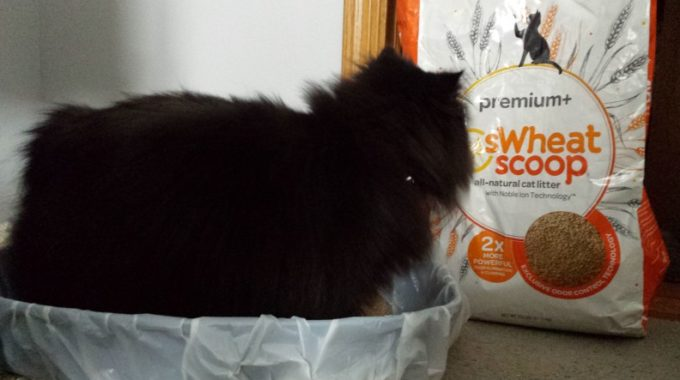8 best flushable cat litter brands reviews