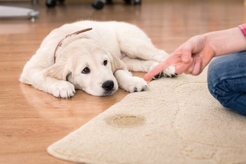 Best Carpet Cleaner for Old Pet Urine Reviews and Buying Guide 2017