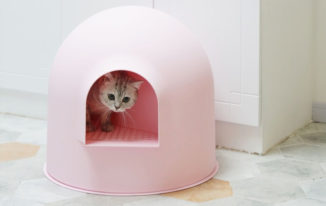 Best Cat Litter Box for Odor Control-Reviews and Buying Guides