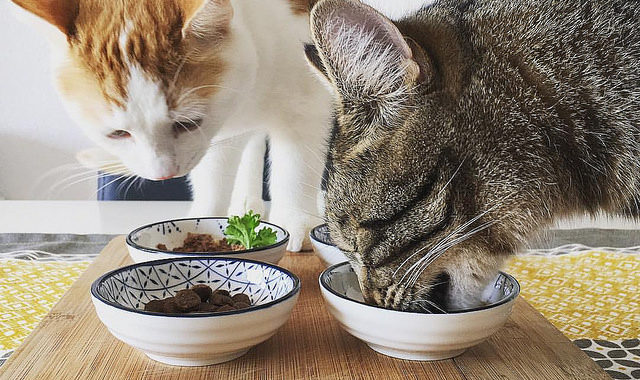 Best cat food for sensitive stomach in 2017