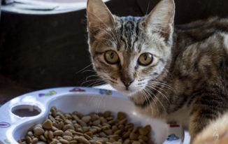 Best Cat Food For Indoor Cats – Reviews And Buying Guide