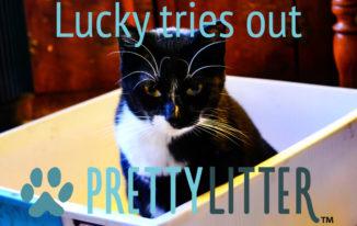 Pretty litter cat litter reviews