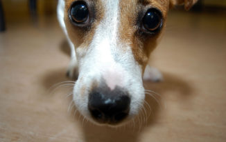 Should You Euthanize A Dog At Home? Our Advice For You!