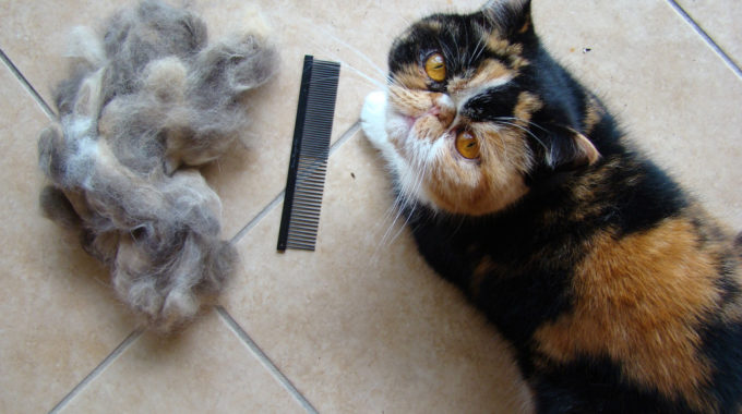 Best Cat Food for Hairballs