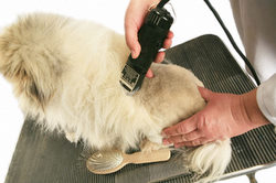 5 Best cordless dog clippers reviews |Buying guide