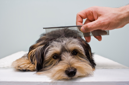 tips dog grooming techniques