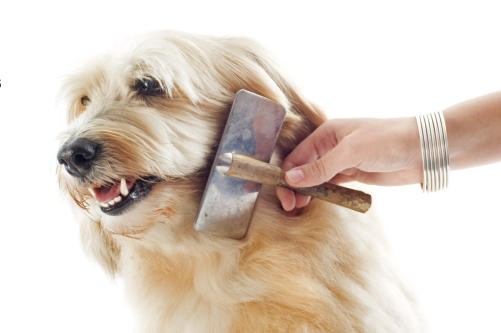 drawbacks of grooming a frightened dog