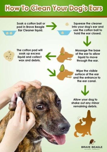 how to clean dog ear's