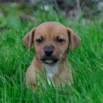 How Often Should A Puppy Poop