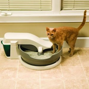 How I Cat-Proofed My Home: Strategies for Dealing with Fur, Poop and Throw Up