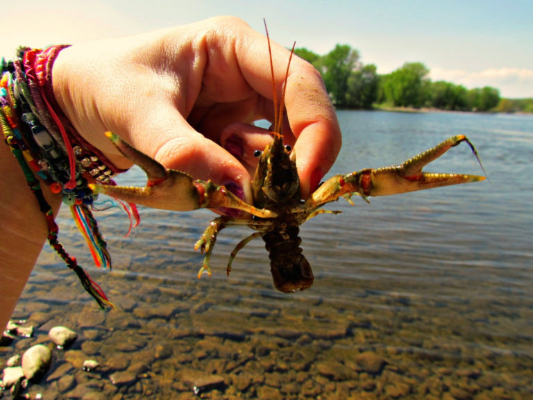 How to Catch and Raise Crawdads (Crayfish)