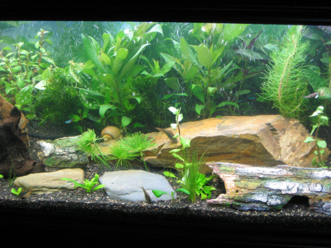 setupTropical Fish Tank
