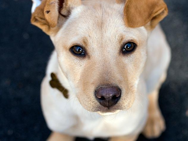 Neutered Dog
