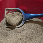Best Dust Free Cat Litter – Reviews and Buying Guides