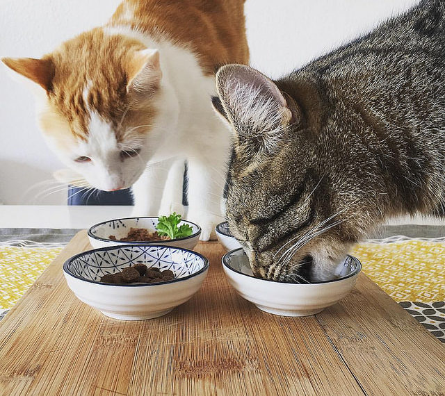 10 Best Cat Food For Sensitive Stomach