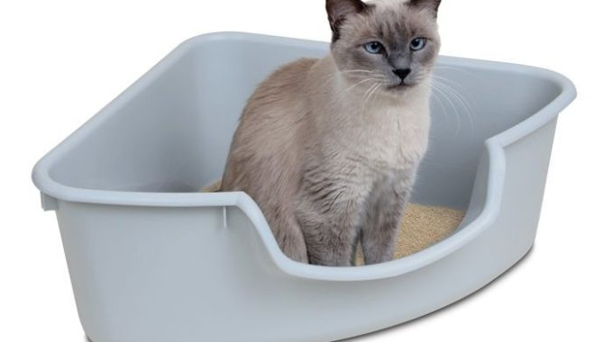 Best Cat Litter for Odor Control