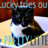 Pretty litter cat litter reviews