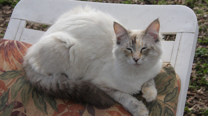 Cat Coat Colors and Patterns – What Cat Loves Need To Know!