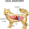 Which Organ Does A Dog Not Have? (Compared To Human)