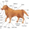 Female Dog Anatomy – Types, Parts and Functions