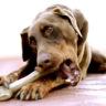 Can Dogs Eat Ham Bones? Scientific Facts Behind